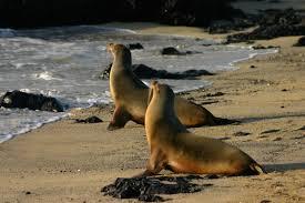 sea-lion3