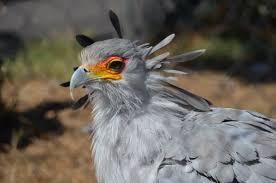 sec-bird