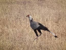 sec-bird2