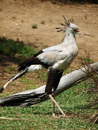 sec-bird3