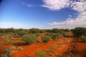 great victorian desert